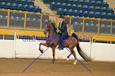 2013 Fall Charity Horse Show Sep 6th AM