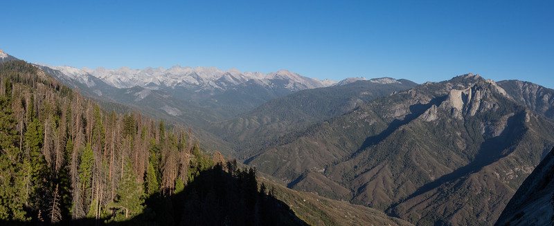 WVWS_Sequoia National Park-.jpg