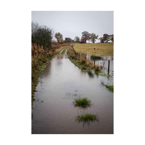 326_Raindrops&Puddles_10x10.jpg