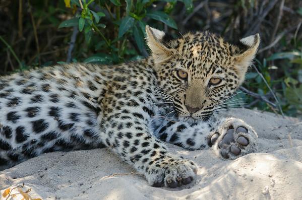 African Safari 2014