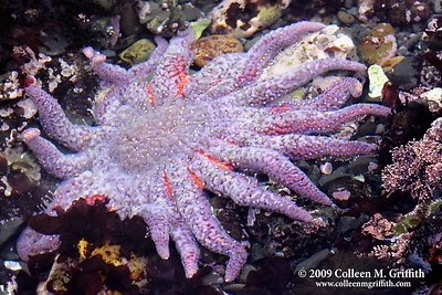 Ocean Wildlife Photos