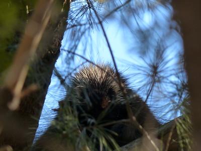 20150401 Harper Park Wildlife