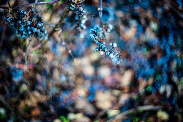 Quiddity - Aperol Blues