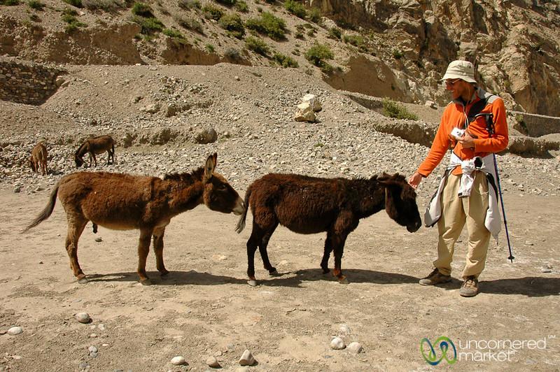 Protecting the Donkey - Annapurna Circuit, Nepal