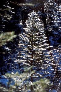 Winter_018