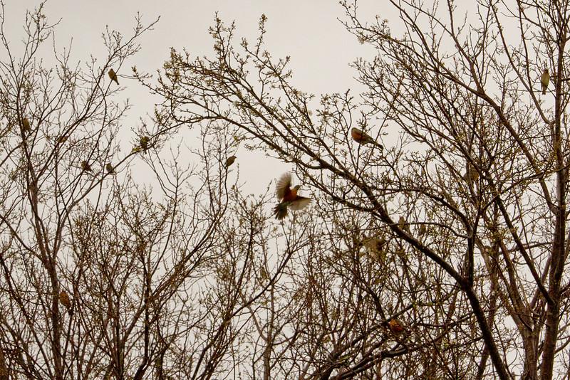 Backyard_Birds-03.jpg