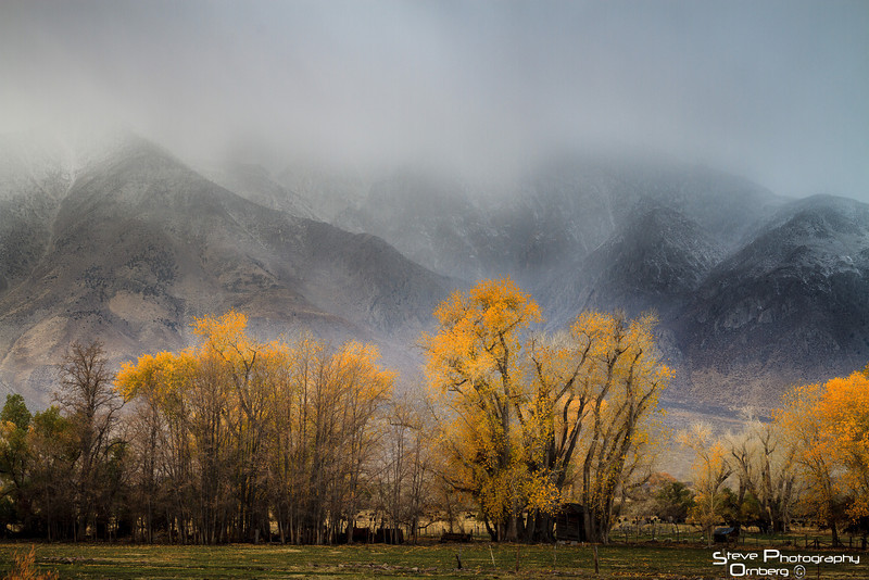 Sierras in snow with fall cottonwoods in Round Valley