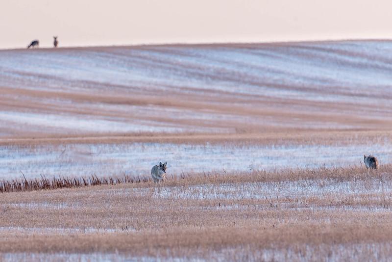 barley 31.jpg