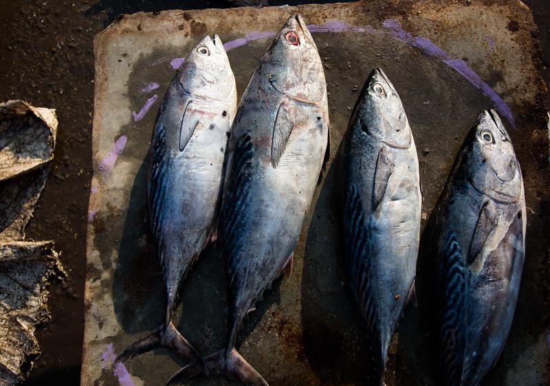 fish raw fish market diu.jpg