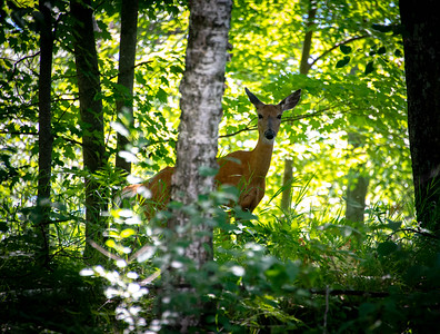 4H Nature Walk