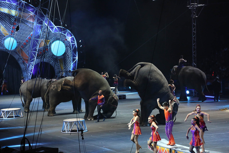 Circus_33.jpg