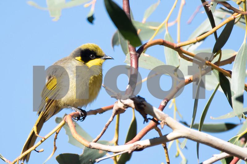 Garden bird may 31 b.jpg