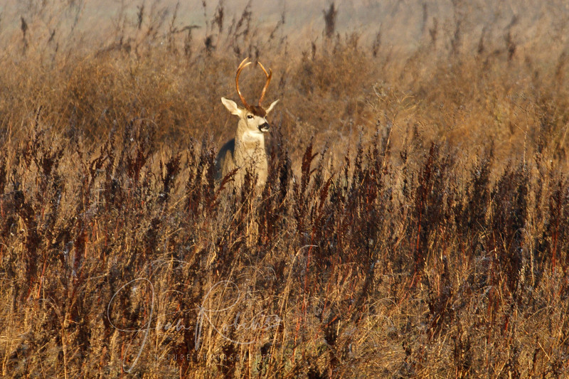A buck appears to be playing with young fauns in the field