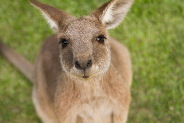 2012 Australia