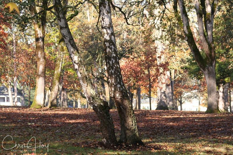Bush Park Tree
