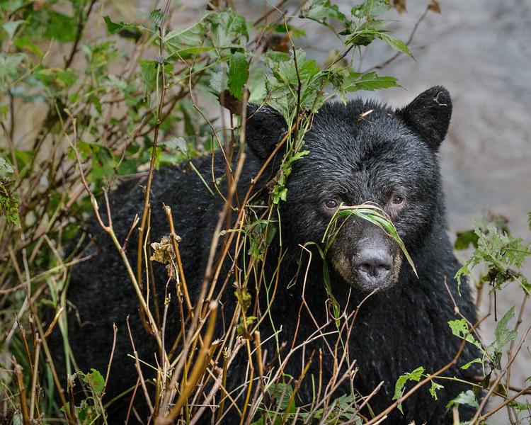 Camo-Bear