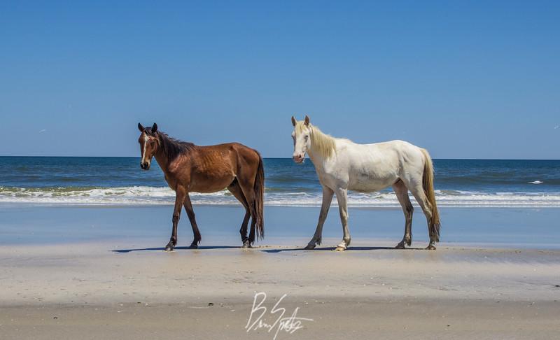 beach horses2.jpg