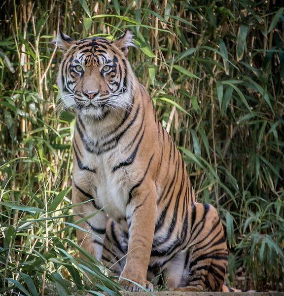 DC-Zoo-2013-2209.jpg