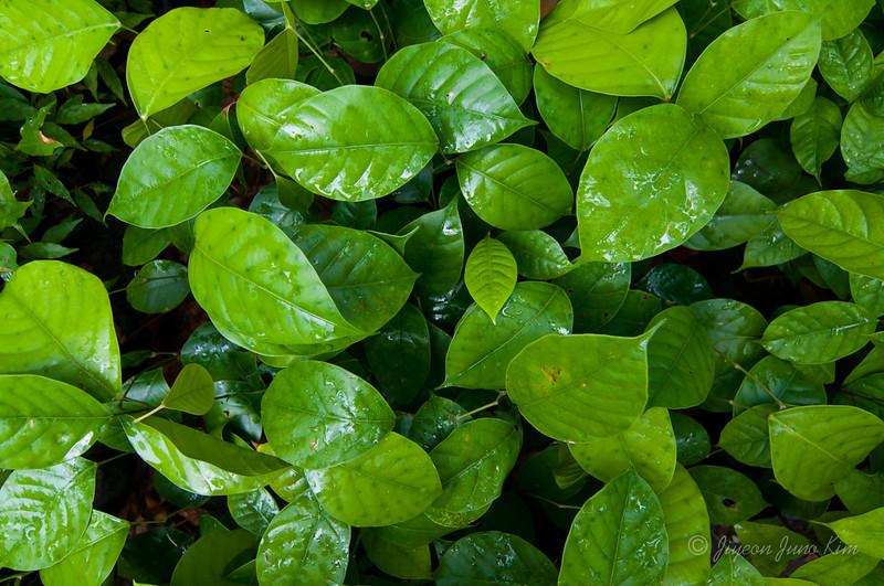 Borneo-Jungle-6728.jpg