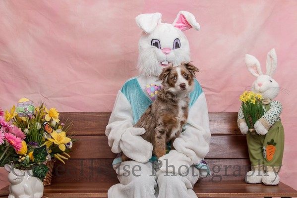 Easter Bunny & Pets 2016