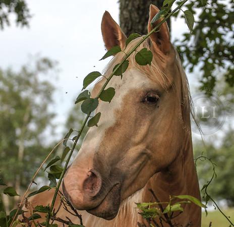 Liber Equus