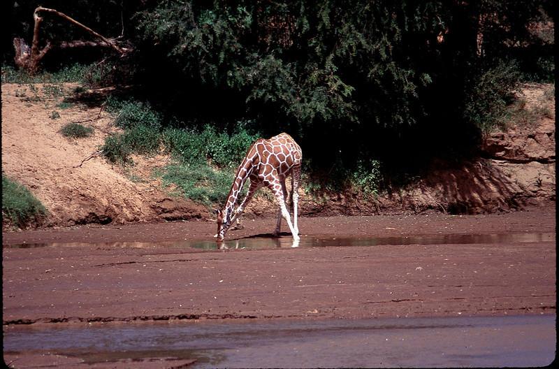 Kenya1_064.jpg