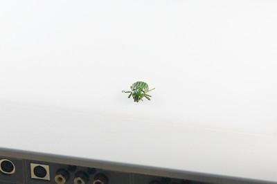 07-30-2016 Carr House Bugs