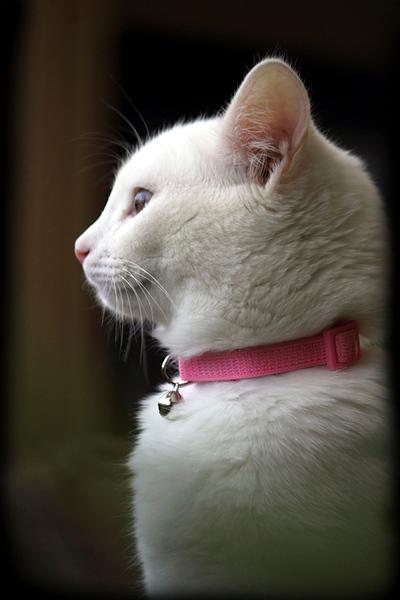 Oona in Profile