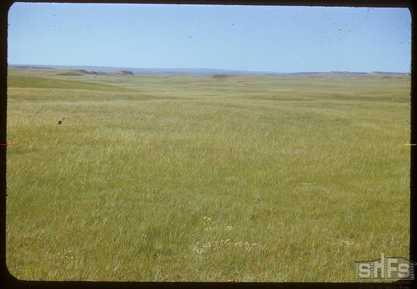 Looking toward Whitemud River north of international boundary.  Rosefield.  07/05/1951