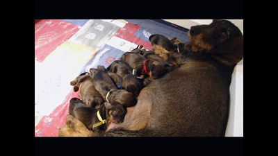 Q pups are one day old