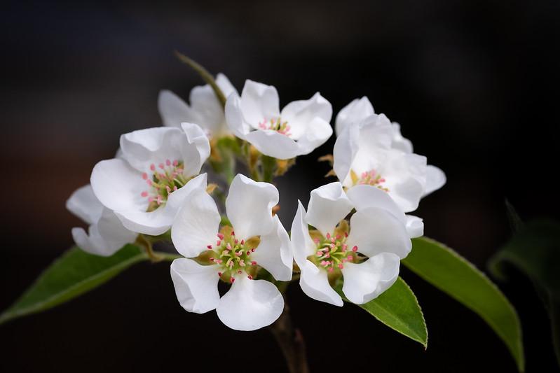 Flowers033019-603.jpg