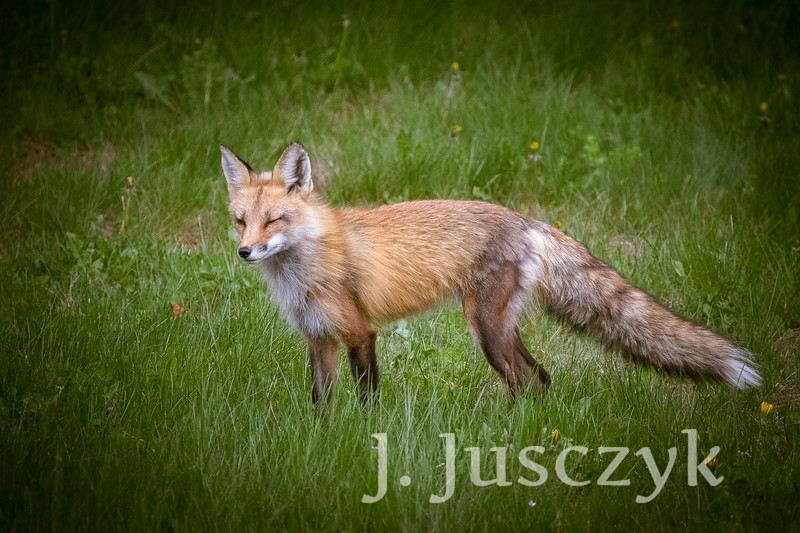 Jusczyk2021-6174.jpg