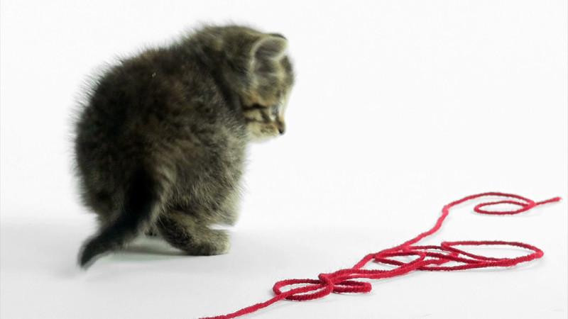 Kittens_tabby_020.mov