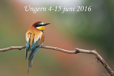 Ungern 2016
