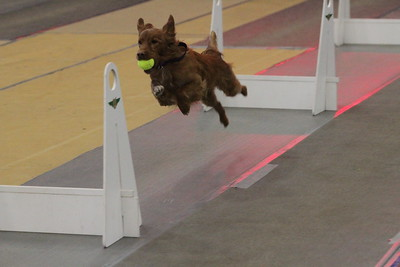 Flyball MAINEia 2019