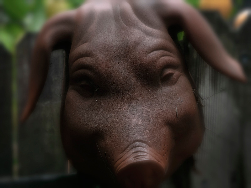 Pig on the wall.jpg