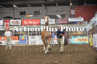 13 VWWD Draft Horse