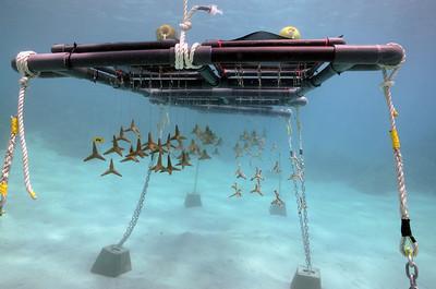 Piti Coral Nursery