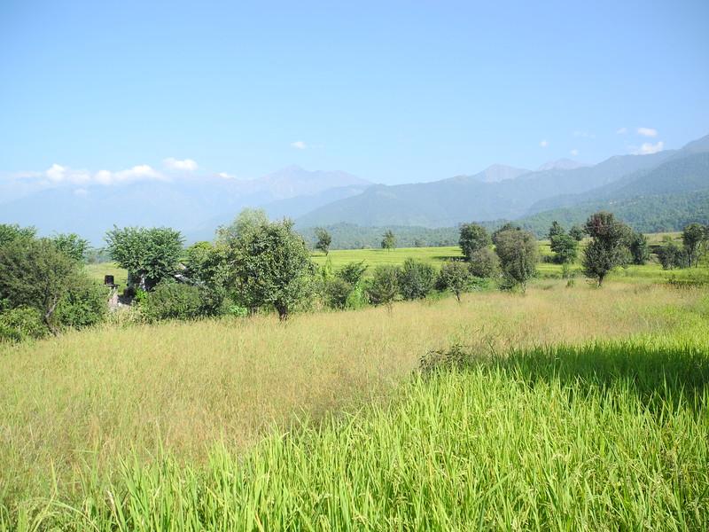 india2011 431.jpg