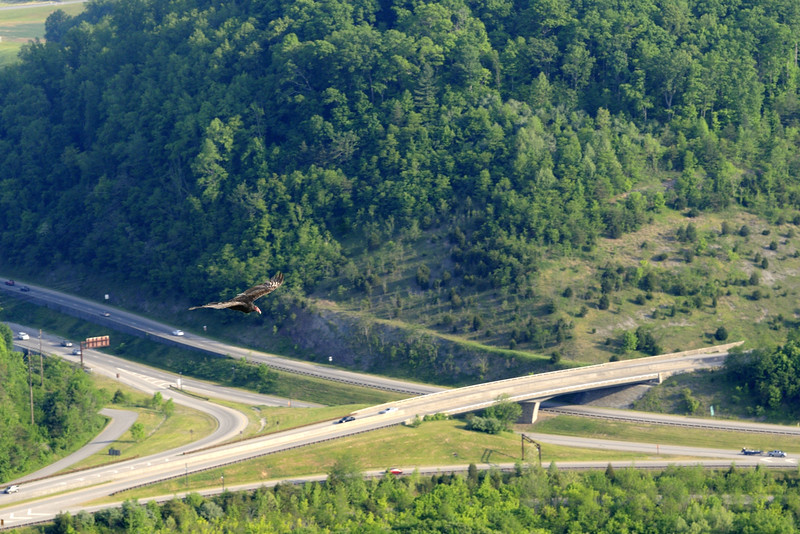 Cumberland Gap National Historical Park in Middlesboro, KY on Saturday, May 9, 2015. Copyright 2015 Jason Barnette