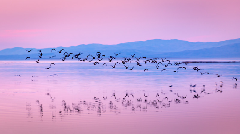 The Salton Sea, CA 2012