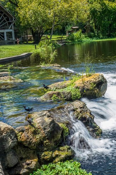 DeLeon-Springs-7.jpg