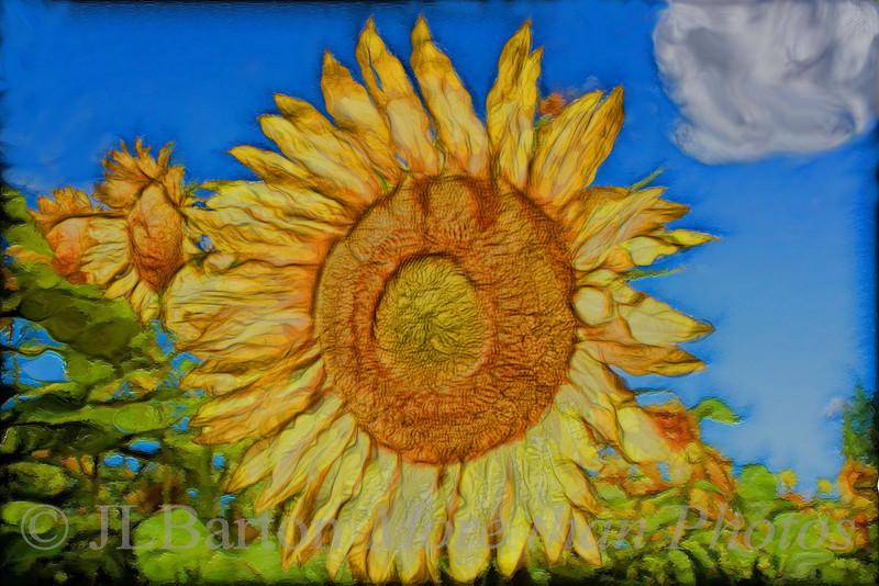 Essling Sunflowers