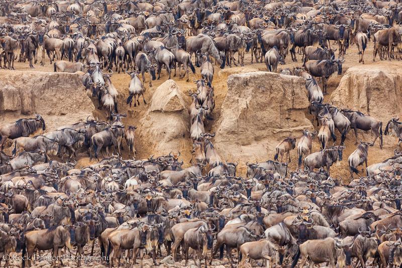 North_Serengeti-72.jpg
