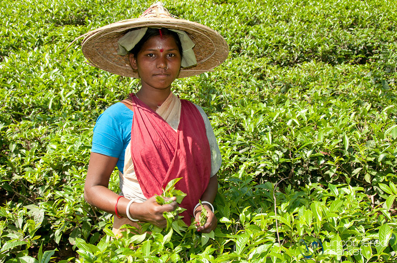 Young Tea Picker Outside Srimongal, Bangladesh