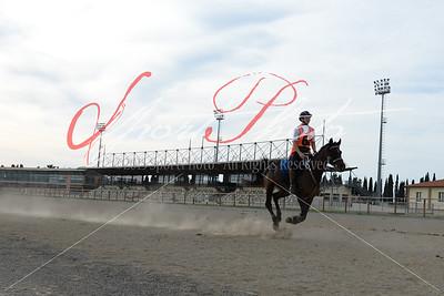Equestrian Endurance Racing