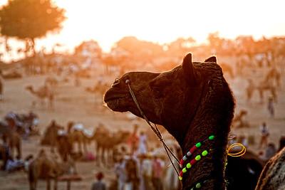 Rajasthan 2011