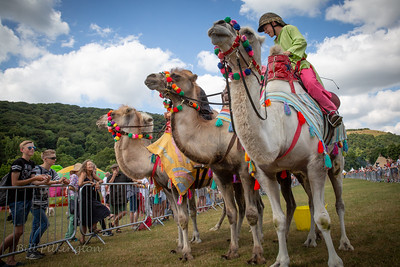 Camel racing at Todmorden Country Fair 2018