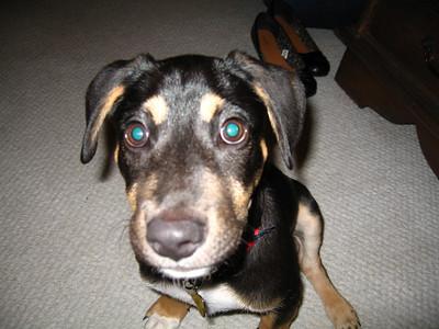 Adrians Dog 2009