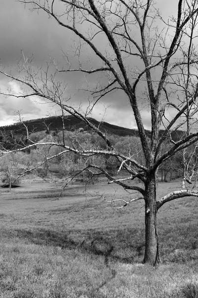 Greeneville Tenn Presley Farm April 2016_12 BW.jpg